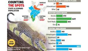 First Ever Count Of Spotted Big Cat Surprises The Forest