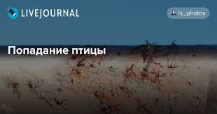 Попадание птицы: lx_photos — LiveJournal