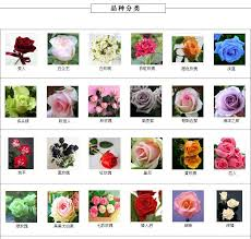 different types of flowers. different types of flowers with pictures and names savingourboys image