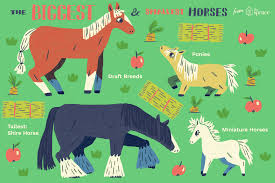 Horse Size Comparison Chart The Largest And Smallest Breeds Horses In The World
