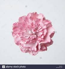 Paper Carnation Flower One Pink Carnation Flower Paper Artwork Stock Photo 163601598 Alamy