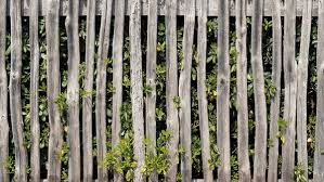 fence. Clear Foliage From Around Your Wooden Fence. Fence