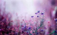 desktop background hd flowers. Wonderful Desktop Wallpaper For Ultra HD TV Heart It And Desktop Background Hd Flowers P