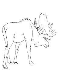 Small Picture Moose Free Animal Coloring Pages For Kids Animal Coloring pages