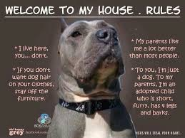 Pitbull Quotes 90 Wonderful 24 Best Pit Bull Quotes Images On Pinterest Pets Pit Bull And Dog Cat
