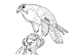 Small Picture Cute Hawk Coloring Pages Jet Coloring Pages Az Coloring Pages