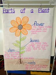 Parts Of A Plant Anchor Chart Plant Lessons Kindergarten