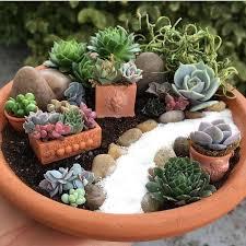 f83dcb57ec4e7a9b4ff9219f56a45ff9.jpg (750750)  Potted SucculentsSucculent GardeningFairy  GardeningContainer ...