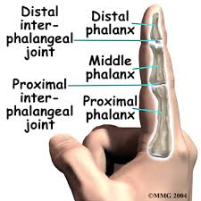 finger joint names. finger joint arthritis names o