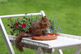quirrel animal spring meal garden by olfan is licensed under cc0 1 0