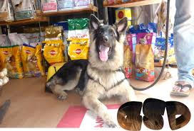 discovery tv shows dogs 101 videos dog breeds a k htm vid 4a8346c74c553fb838eb21f5caea92ef38a21127