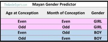 Mayan Baby Predictor Chart Chinese And Mayan Gender Predictor Both Right In Last