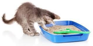 Выбираем <b>наполнитель для кошачьего туалета</b>
