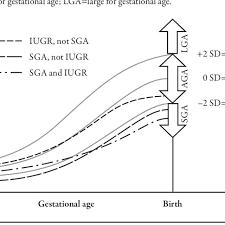 Prenatal Growth Chart Demonstrating Development Of