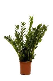 office cubicle plants. Office Cubicle Plants. Fluorescent Light Plants Chic Good Furniture Wondrous Great Low Or C