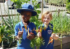 Kitchen Garden Program Carmel Adventist College About Our School