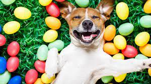 Wallpaper Easter, eggs, dog, 5k ...