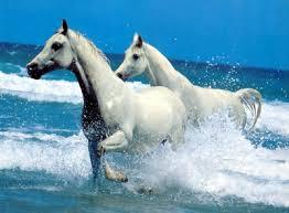 """Résultat de recherche d'images pour """"photo de cheval"""""""