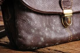 mildew on leather purse