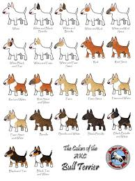 Brindle Color Chart Proper Bull Terrier Colors And Codes Strictly Bull Terriers