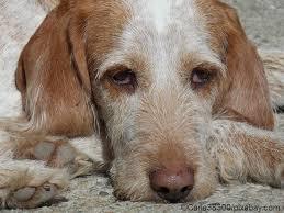darmkrebs hund endstadium