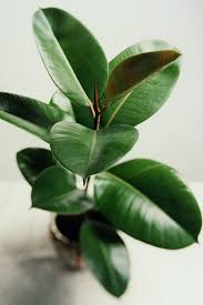 garden large leaf house plants interesting 25 easy houseplants easy to care for indoor plants