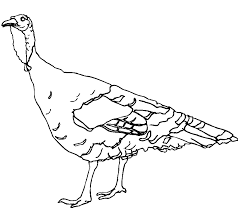 Some of the pages include activities too. Wild Turkey Coloring Page Coloring Home