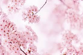 10 Of Tokyo's Most <b>Beautiful Sakura</b> Viewing Spots - Savvy Tokyo