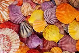 ColorfulSeashells