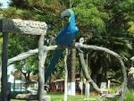 imagem de Araruna Paraná n-19