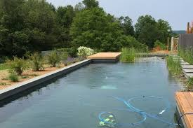 natural pool and garden have become a unity