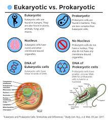 prokaryoteany eukaryotes