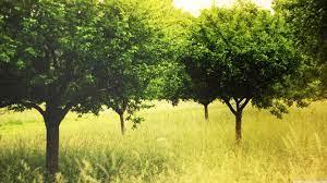 Summer Green Trees Ultra HD Desktop ...