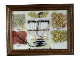 Navajo Dye Chart Dye Chart By Arletta Henderson Navajo Santa Fe Crafstman