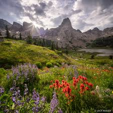 wonderful wildflowers in the cirque of the towers wind river range