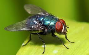 Best ways to rid of house flies