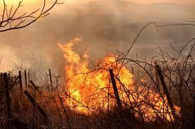 Výsledok vyhľadávania obrázkov pre dopyt požiar trávnatého porastu