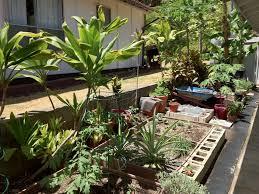 My Kitchen Garden Diy Grow A Garden From Kitchen Scraps