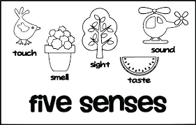 Free Printable 5 Senses Coloring Pages 5 Senses Colori Pages Five