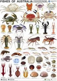 Crab Species Chart Pin By Gary Huerto On Fyi Fish Ocean Creatures Fish Chart