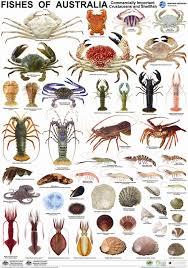 Pin By Gary Huerto On Fyi Fish Ocean Creatures Fish Chart