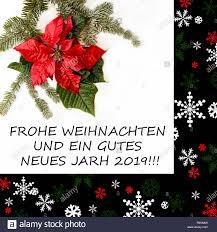 Weihnachtsstern Blume Mit Tannenbaum Und Schnee Auf Weißem