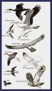 All About Waterfowl