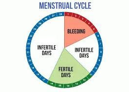 What Are Your Most Fertile Days Fertility Fertility Day
