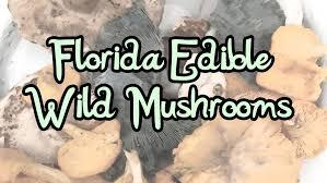 Florida Mushroom Identification Chart Five Easy To Id Florida Edible Wild Mushrooms The Survival