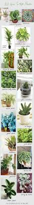 22 Hard To Kill Houseplants