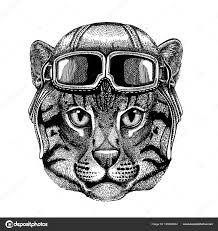 Zvířecí Nošení Letec Přilba S Brýlemi Vektorový Obrázek Kočka