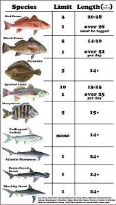 36 Prototypical Florida Saltwater Fish Identification Chart Pdf