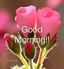good morning pink roses