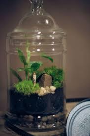 Bonsai Terrarium For Landscaping Miniature Inside The Jars 63